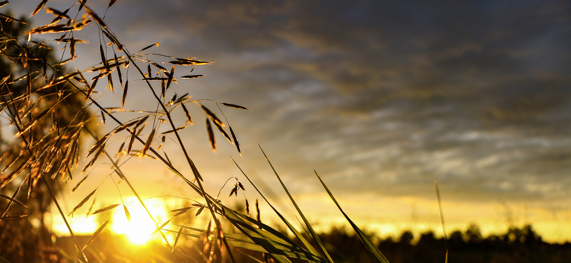 Sunset in a wheat field - light in the world